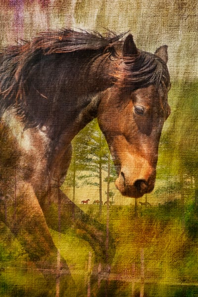 A New Beginning Photography Art | Deb Little Photography
