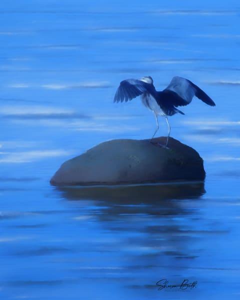 Blue Heron Art Art | Sharon Beth