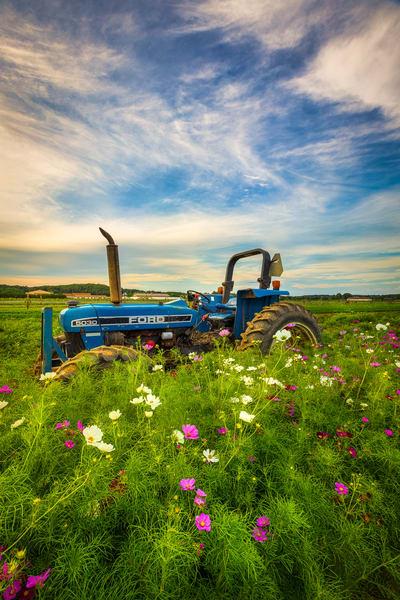 Tractor In Cosmos Art | Teaga Photo