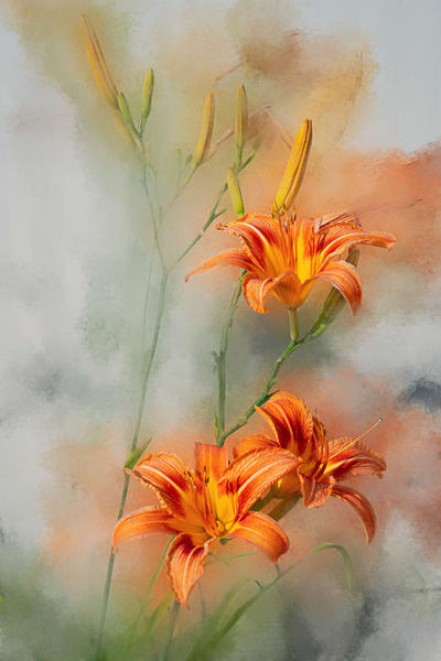 Tiger Lilies Photography Art | Quiet Heart Images, LLC