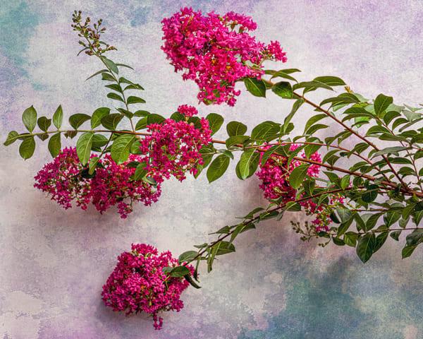 Botanical Textures
