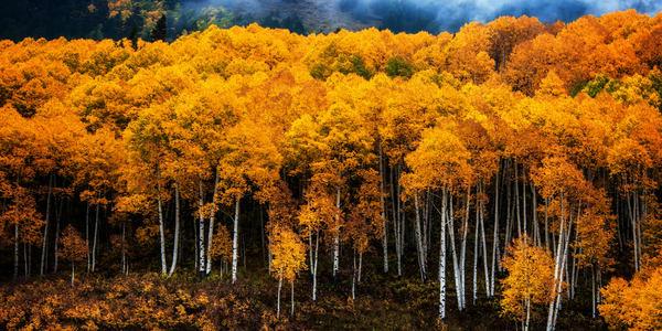 Golden Blanket Semi Panorama Photography Art   Ken Smith Gallery
