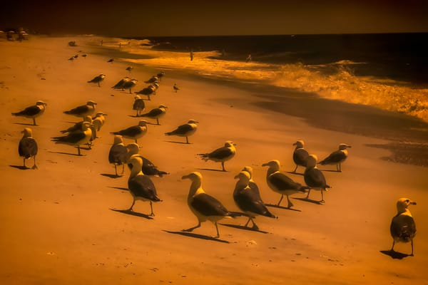 Shimmering Seagulls Photography Art   nancyney
