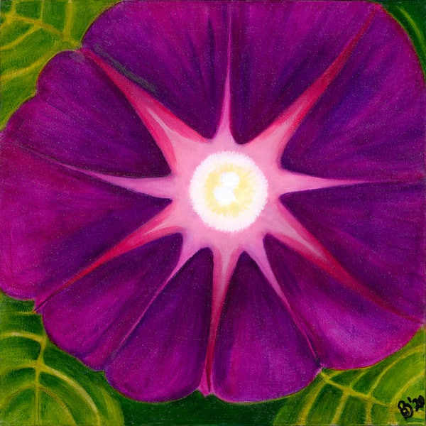Morning Glorious Fuchsia Art | Digital Arts Studio / Fine Art Marketplace