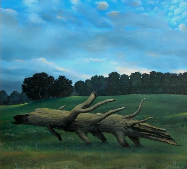 Old Fallen Tree Art   Scheihagen Art