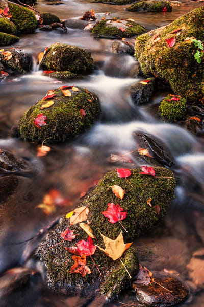 Wet With Color Photography Art | Ken Smith Gallery