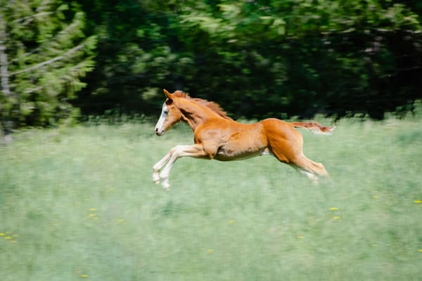 Fine Art Horse Photography | Joy