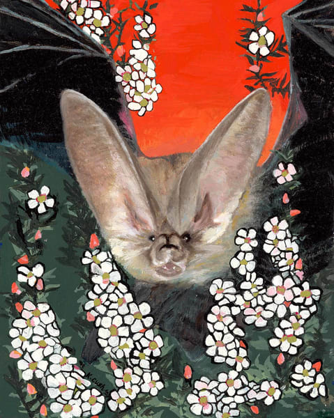 The Lesser Long-Eared Bat