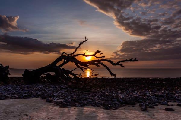 Sunshine and Driftwood on the Rocks