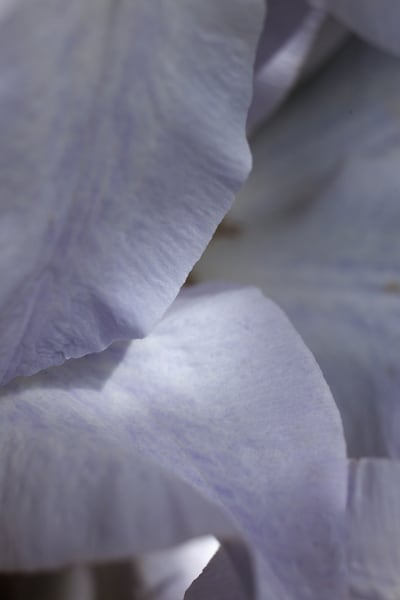 Clematis, And A Touch Of Sun Photography Art | Christopher Grey Studios