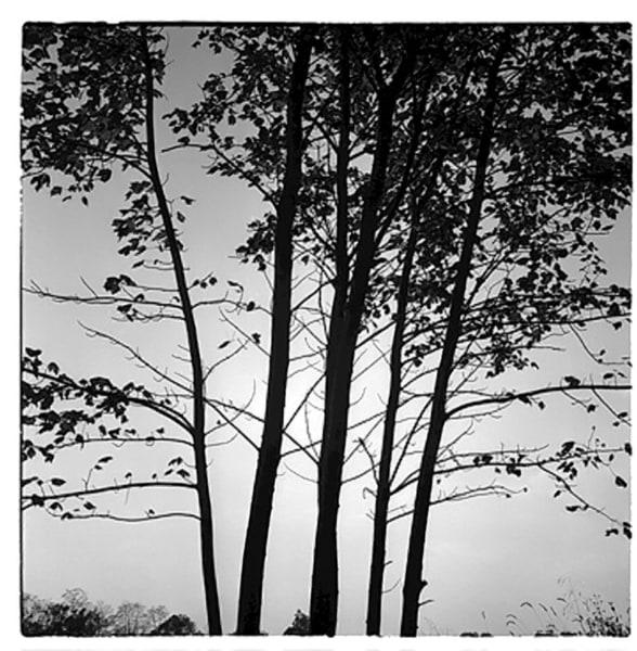 Trees Art   artecolombianobyberenice