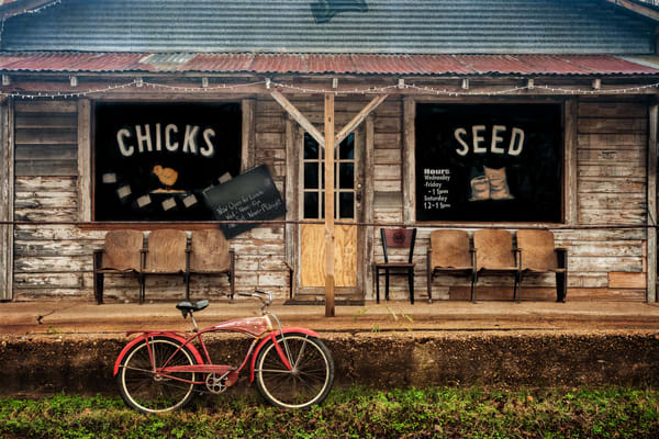 Chicks And Seed Photography Art | Ken Smith Gallery