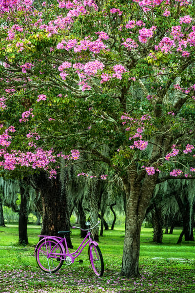Pink Trumpets Photography Art | Ken Smith Gallery