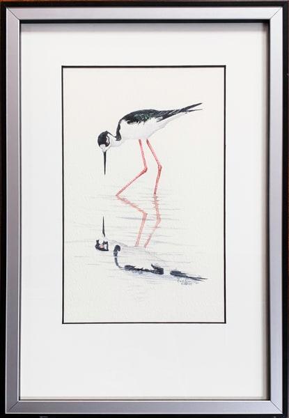 Black Necked Stilt Photography Art | Drew Smith Photography, LLC