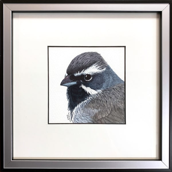 Black Throated Sparrow Photography Art | Drew Smith Photography, LLC
