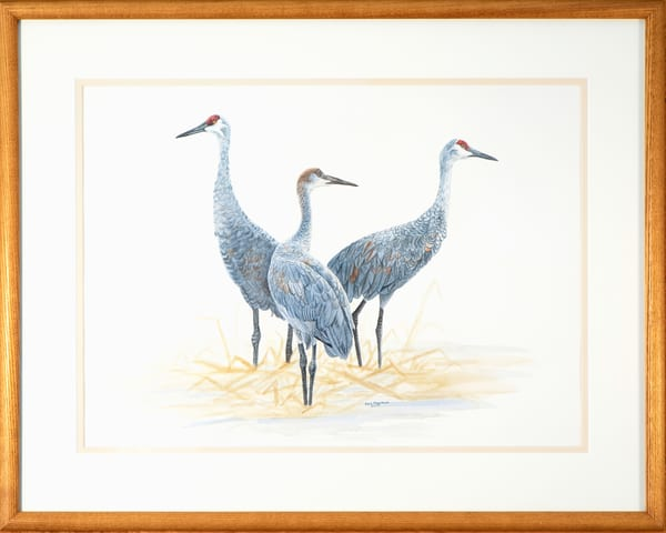 Ever Vigilant   Sandhill Crane Family Photography Art | Drew Smith Photography, LLC