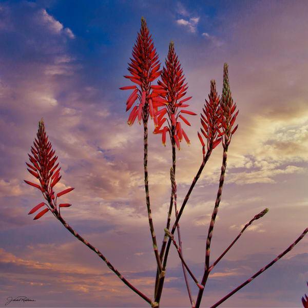 unfettered freedom sunset roam free orange jackie-robbins-studio photographic-prints buy-art-onlin