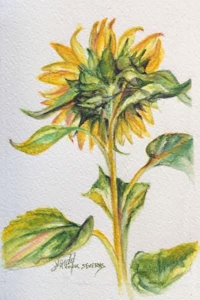 Lindy Cook Severns Art | Shy Sunflower, notecard