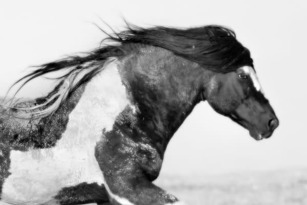 Washakie's Run Photography Art | Deb Little Photography