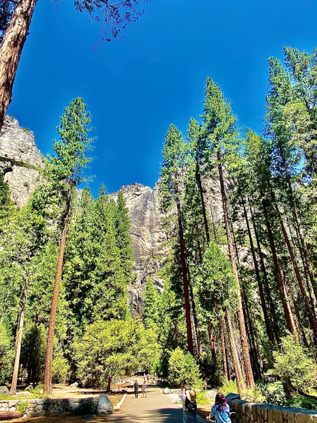 The Trees Of Yosemite National Park Art | Coat Of Many Colors