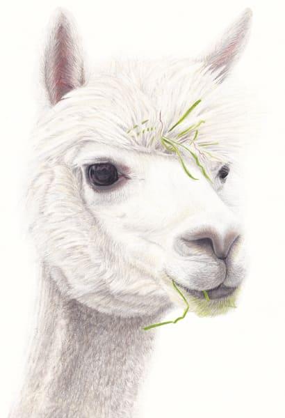 Alpaca Alert Art | Gossamer Lane Fine Art