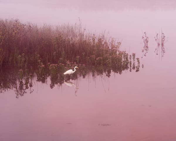Egret Dawn Photography Art | Quiet Heart Images, LLC