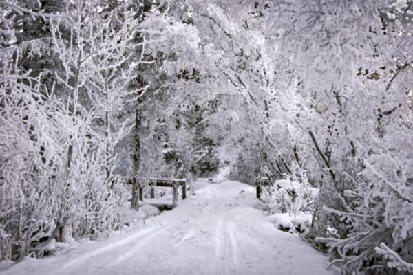 Greeting Card - Winter WOnderland