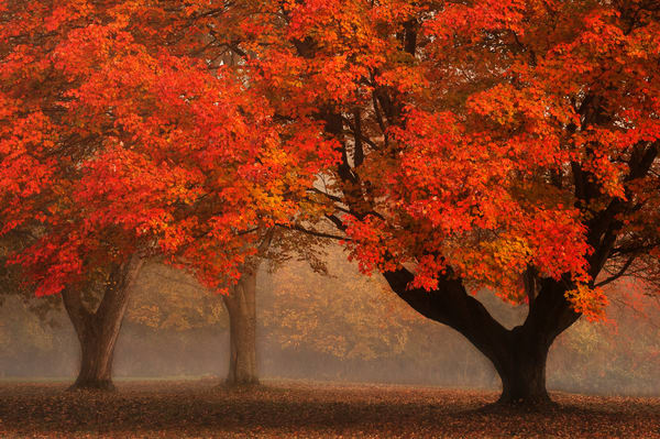 Maple Magic Photography Art | Ken Smith Gallery