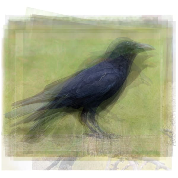 Overlay art of photographs - Abstract Animal artwork portraits for sale as fine art prints.