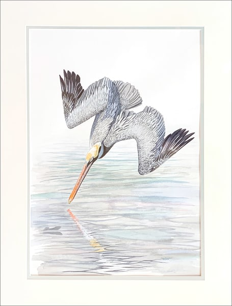 Take The Plunge   Brown Pelican Photography Art | Drew Smith Photography, LLC