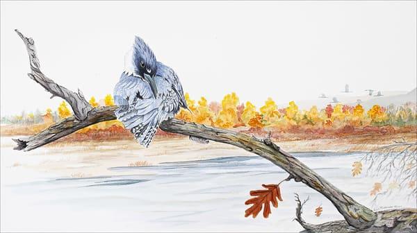 Fall Kingfisher Photography Art | Drew Smith Photography, LLC