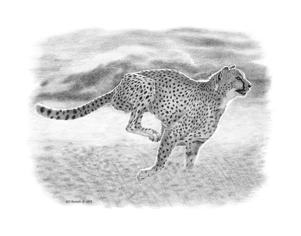 Bill Harrah pencil drawing of a Cheetah chasing its prey