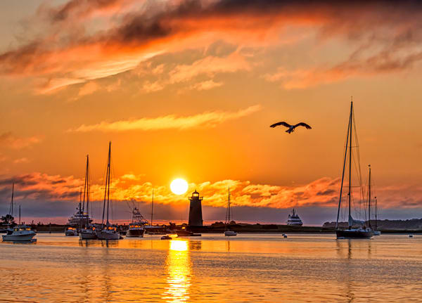 Edgartown Light Morning Gull Art | Michael Blanchard Inspirational Photography - Crossroads Gallery