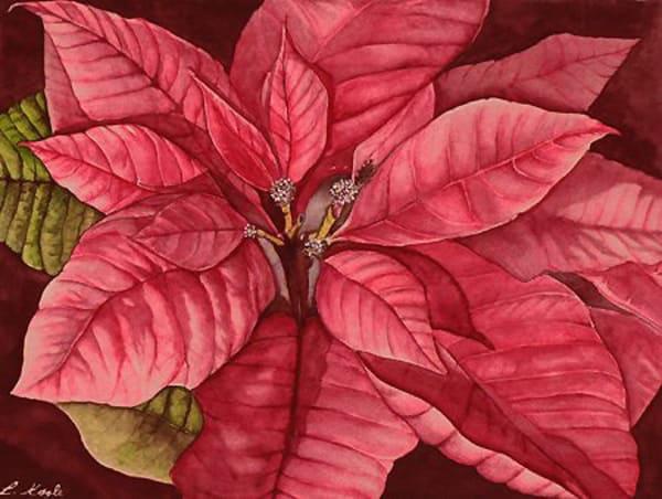 Poinsettia Art | artalacarte