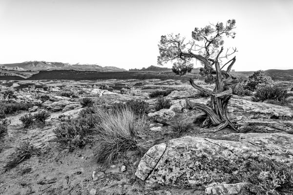 Alone in the Desert - Arches National Park fine-art photography prints