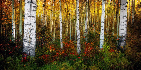 Aspen Floor Semi Panorama Photography Art | Ken Smith Gallery
