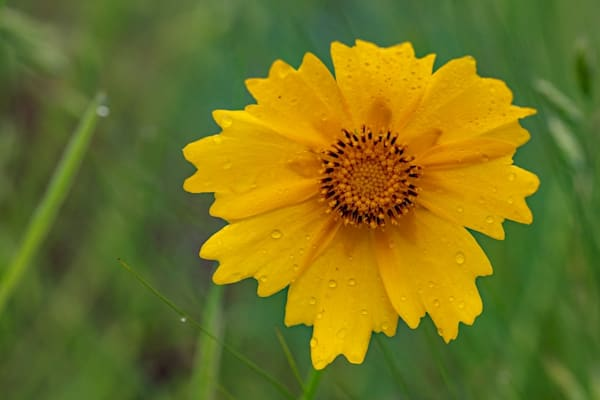 Yellow Daisy Wildflower5665  Photography Art | Koral Martin Healthcare Art