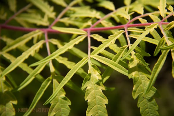 Leaves Crystal Bridges 3791  Photography Art | Koral Martin Healthcare Art