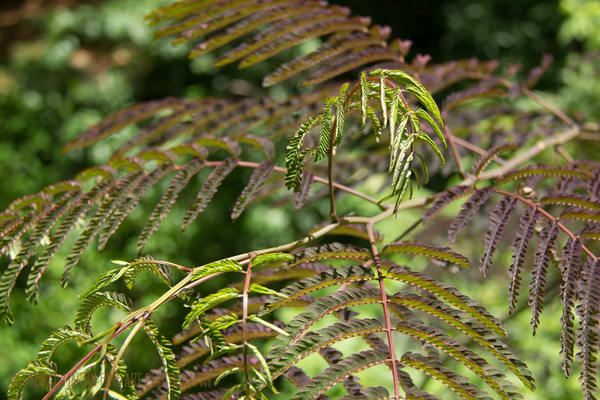 Succulants, Ferns, Leaves