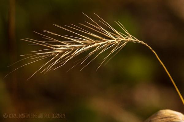 Grass 0635  Photography Art | Koral Martin Healthcare Art