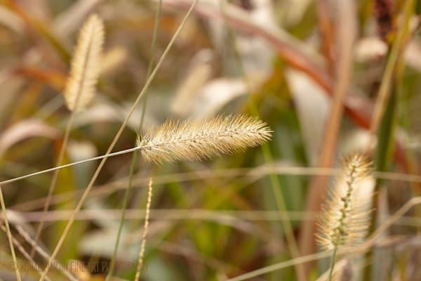 Grasses 0738  Photography Art | Koral Martin Healthcare Art