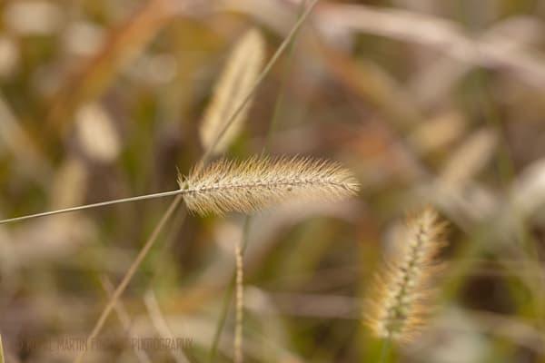 Grasses 0741  Photography Art | Koral Martin Healthcare Art