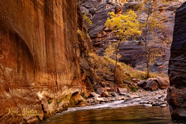 Narrows Fall Tree 2826  Photography Art | Koral Martin Healthcare Art