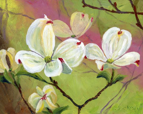 Dogwood Flowers  Art | Linda Sacketti