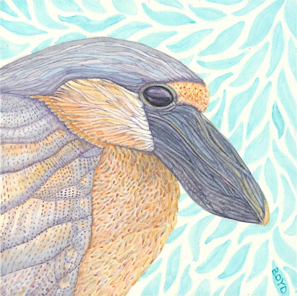 Boat-billed Heron. Reproduction of original painting by Judy Boyd Watercolors