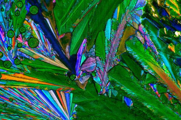 Leaves Of Grass Art | Carol Roullard Art