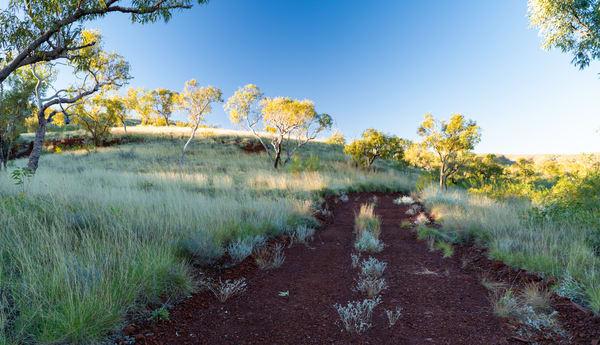 Pilbara Track Photography Art | Tolowa Gallery