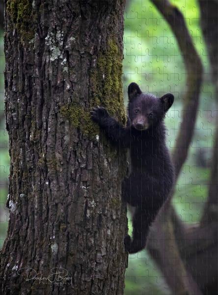 Baby Bear   dougbusby