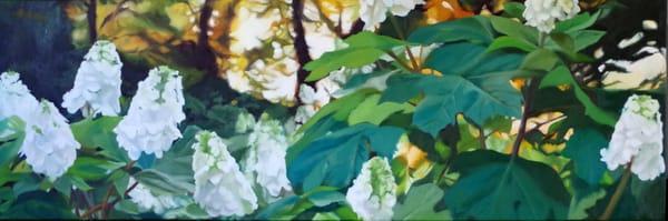 Hydrangeas At Sunset Art   Helen Vaughn Fine Art