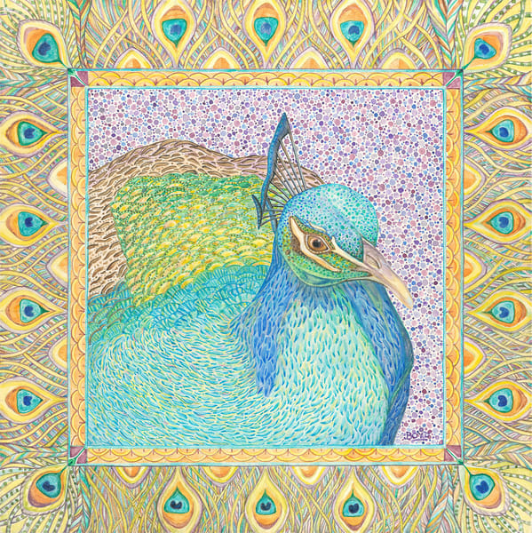 Fine art reproduction of Indian Peafowl painting from Judy Boyd Watercolors